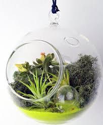 home decoration multi shape glass hanging terrarium container