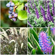 Botanical Garden Sydney by 10 Tips To Make The Most Of Your Visit To Sydney U0027s Royal Botanic