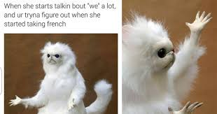 Cats Meme - funny persian cat memes funny pics story