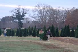 a trip to a typical christmas tree farm what to expect