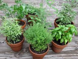 do you know how easy it is to start your first herb garden