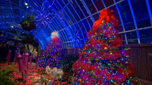 phipps conservatory christmas lights phipps conservatory s winter flower show a festive tradition