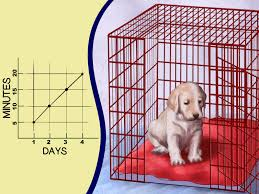 crate training how to buy a puppy crate 14 steps with pictures wikihow