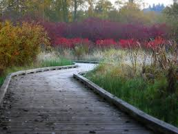 king county native plants best walks getaways for fall color in seattle and western