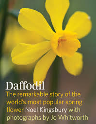 most popular flowers daffodil the remarkable story of the world u0027s most popular spring