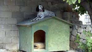 cool dog houses how to keep a dog house cool in summer animals mom me