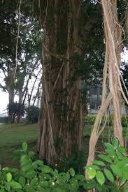 5 of the world u0027s most amazing trees lauren lanphear cleveland u0027s