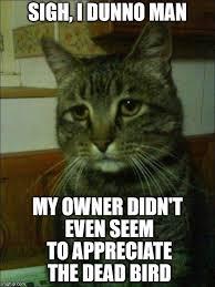 Meme Generator Imgflip - depressed cat meme generator image memes at relatably com