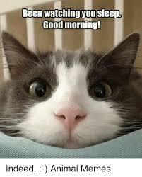 Good Grumpy Cat Meme - 25 best memes about grumpy cat grumpy cat memes