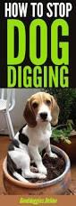 4348 best good dog info images on pinterest puppies dog stuff