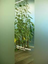 raumtrenner falttr 87 besten capstone bilder auf vertikale gärten