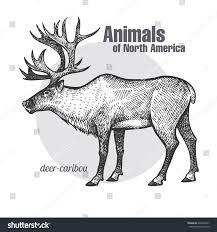 deer caribou hand drawing animals north stock vector 609403067