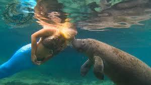 mermaid melissa raises awareness to protect manatees videos