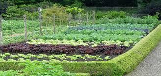 brilliant best organic soil for vegetable garden how to make soil