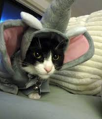 Halloween Costumes Cats 23 Cutest Cat Halloween Costumes Http Mycatcentral