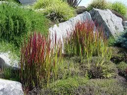 garden plants grasses www coolgarden me