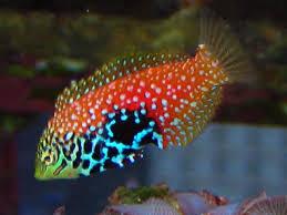 best 25 marine fish ideas on aquarium fish