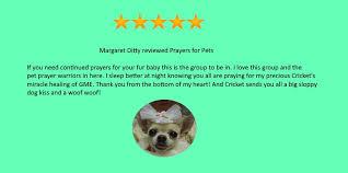 pet prayer prayers for pets 1 org uplifting pets pet parents fosters and