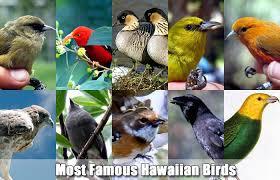 Hawaii birds images Hawaiian birds native birds of hawaii jpg