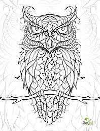 owl colouring page u2026 pinteres u2026