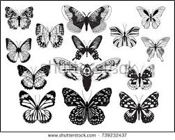 butterfly collection on black vectors free vector