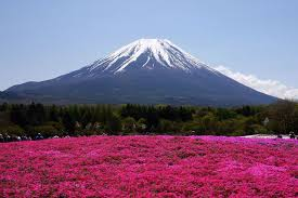 most beautiful parks in the us beautiful takinocho shibazakura park japan 15 pics world full