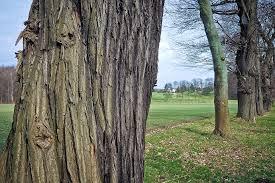free photo trees tree nature wood free image on