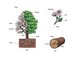 branch 1 noun definition pictures pronunciation and usage