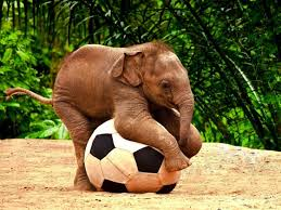 cool elephant wallpaper baby elephant playing football hd desktop wallpaper instagram photo