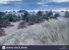 Michigan Vegetaion images Grass flower dune stock photos grass flower dune stock images jpg