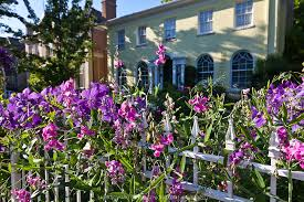 everlasting sweet pea clematis and sweet peas on a white picket fence greenfuse