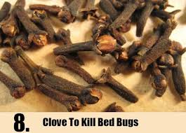 natural bed bug remedies pin by forklifttrain on bed bug bites pinterest bed bugs bites