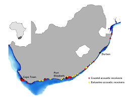 Port Elizabeth South Africa Map by Atap In The Indian Ocean An Interview With Paul Cowley Save Our