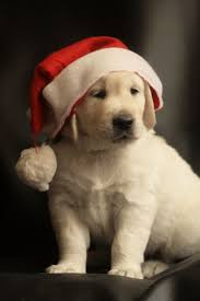 puppy thanksgiving 162 best puppies to dogs images on pinterest animals puppies