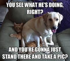Funny Meme Dog - 25 funny dog memes dogtime