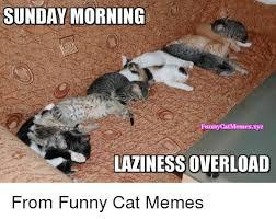 Sunday Morning Memes - sunday morning funny catmemesxyz laziness overload from funny cat
