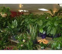 Flowers Bristol Tn - about misty u0027s florist u0026 greenhouse inc bristol tn florist
