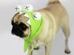 Monster Halloween by Easy Monster Halloween Costume For A Dog How Tos Diy