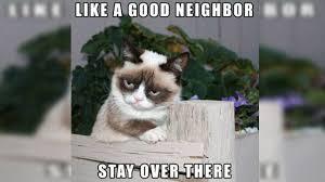 Funny Grumpy Cat Meme - most hilarious grumpy cat memes on the web
