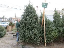 christmas trees for sale selling christmas trees in lansdowne pa for 40 years