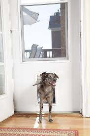 cat running into glass door amazon com petsafe plastic pet door with soft tinted flap white