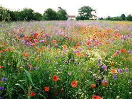 wildflower gardening hgtv
