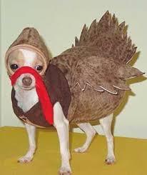 100 best thanksgiving turkeys images on thanksgiving