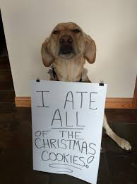 december shot of the day dog eats all of the christmas cookies