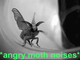 Moth Meme - angry moth noises descriptive noise know your meme