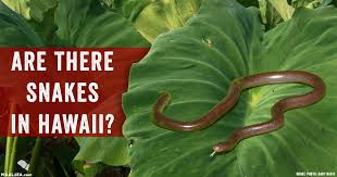 Blind Snake Hawaii Are There Snakes In Hawaii Yes Explanation In Our Maui Blog
