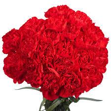 flowers for globalrose 100 fresh cut pink carnations fresh