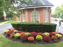 fall color plants native fields landscaping llc