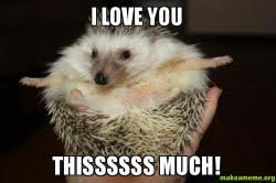 Hedgehog Meme - hedgehog love hedgehog