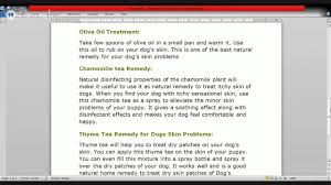 know2day common dog skin problems effective home remedies for